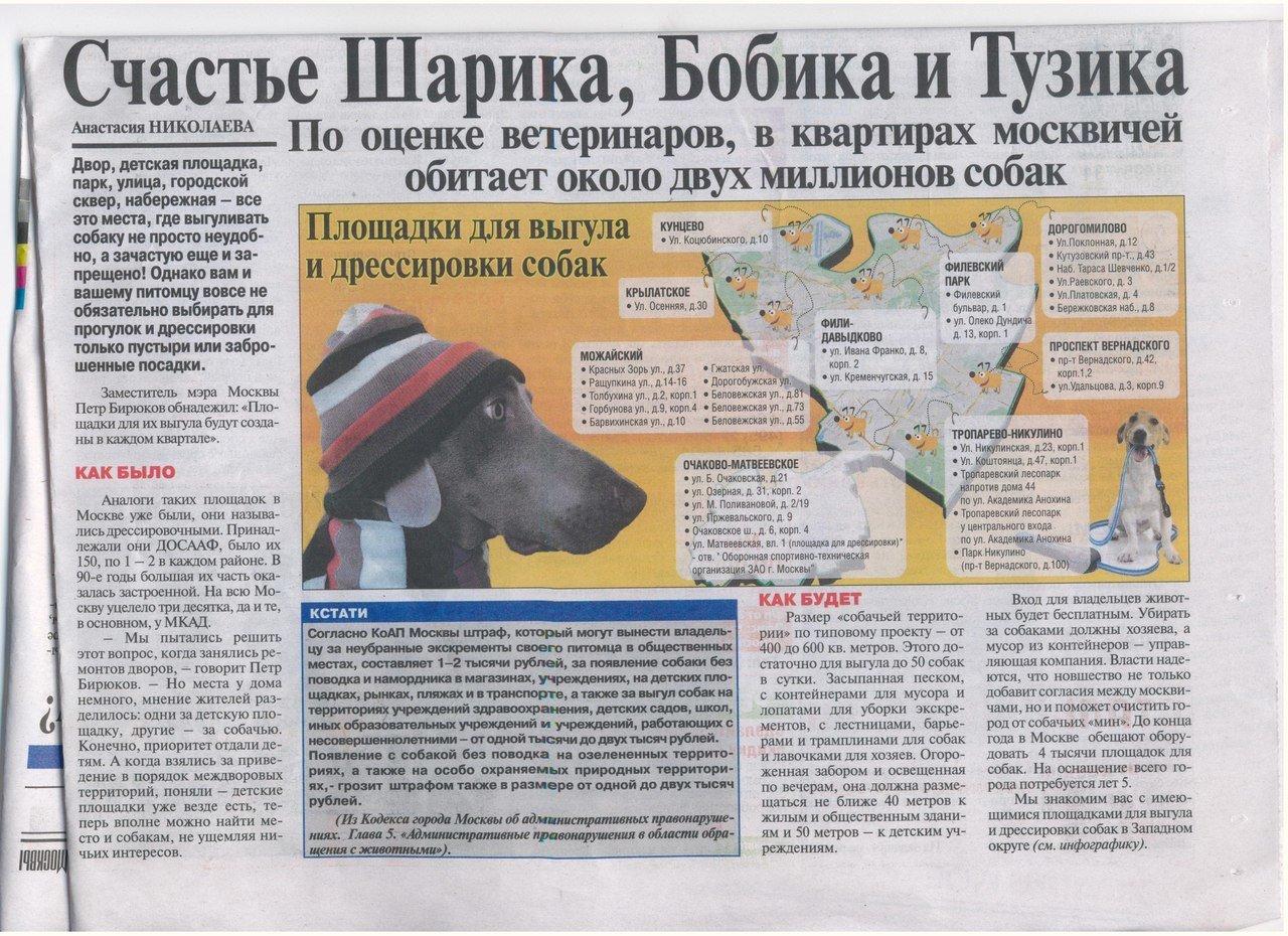 Закон выгула собак в городе всей вероятности